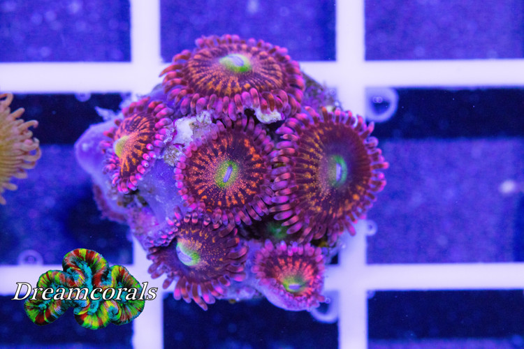 Alien Antivenom Zoa